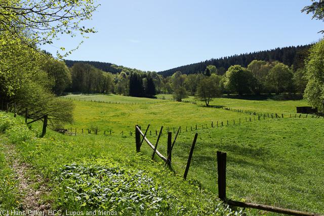 von Niedersfeld hoch zum Ettelsberh und zurück über den Langenberg