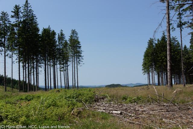 von Brilon Wald nach Willingen