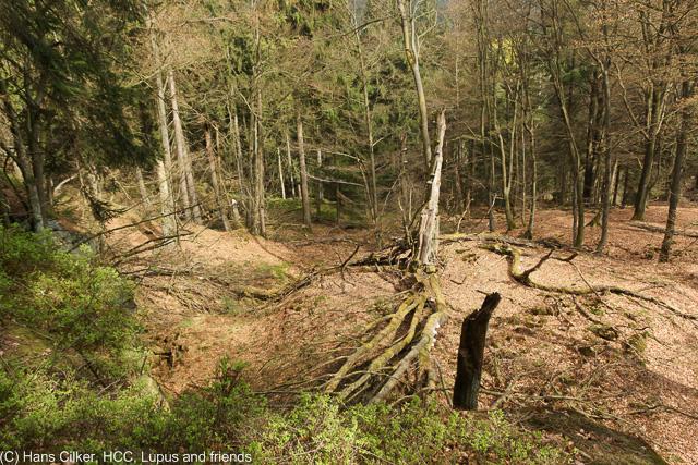 von der Alten Eisenbahn nach Herbram Wald