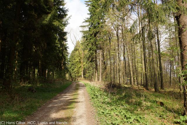 von Herbram Wald zur Driburger Hütte