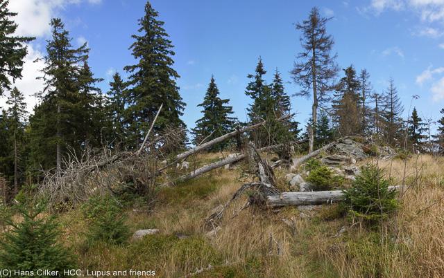 über den Arber Rücken Richtung Arber, 5 Gipfel Tour