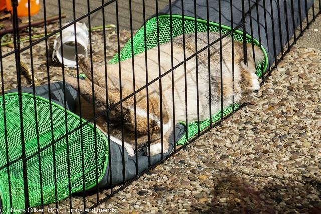 ein kleines Kaninchen unterhält sich in der Sonne