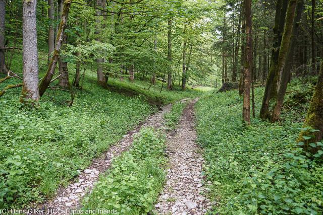 Wir wandern rund um Kempen rauf nach Bauerkamp und immer rund um die Bielsteinhöhle herum, der Weg teilweise sehr schlecht zu erkennen, zu lange ist da niemand mehr gefahren.
