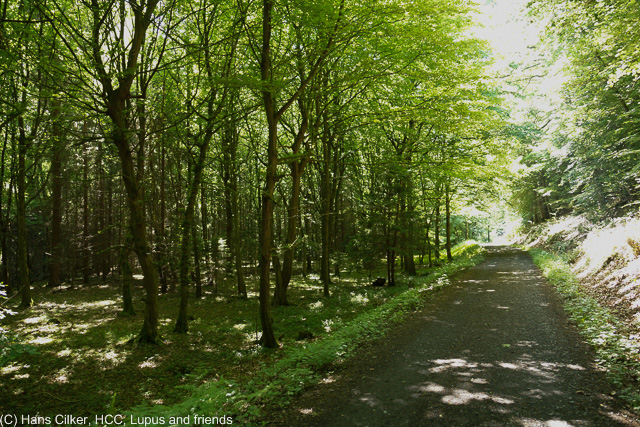 Wir gehen auf den Spuren des Hanseweges zum Startpunkt auf der Waldroute, wie beim ersten mal auch, Arnsberg ist spitze, aber die Waldroute mal eher wieder mau. Zuviel Wald und kaum Abwechselung.