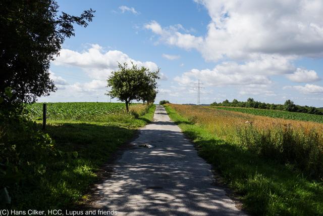 wir starten am Parkplatz in Kempen und gehen Richtung Viaduktweg. Auf dem dann runter und weiter bis er den Westfalenweg kreuzt, auf dem hoch zur Telegraphenstation. Ab da auf dem Eggeweg bis zum Abstieg nach Kempen.