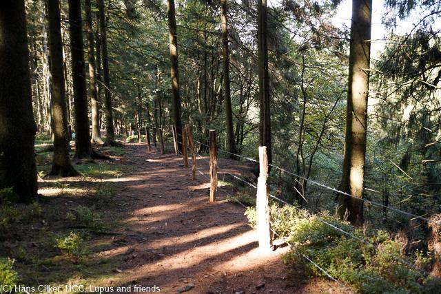 wir starten in Asseln und wandern nach Herbram Wald, über den Eggeweg geht es dann zurück.