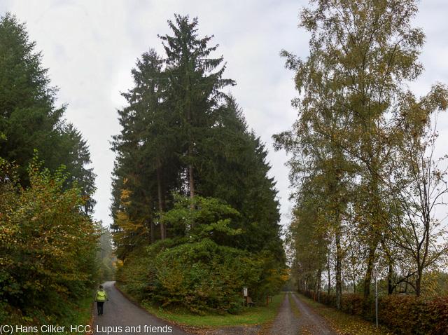 Ein schmieriger Tag, eigentlich sollte es der goldene Oktober sein, aber ein Trüber Tag nach dem anderen, bei 8 Grad steigen wir hoch zu den Höhen über Ringelstein, aber ausser Wald bekommen wir auf 20 km nix zu sehen.