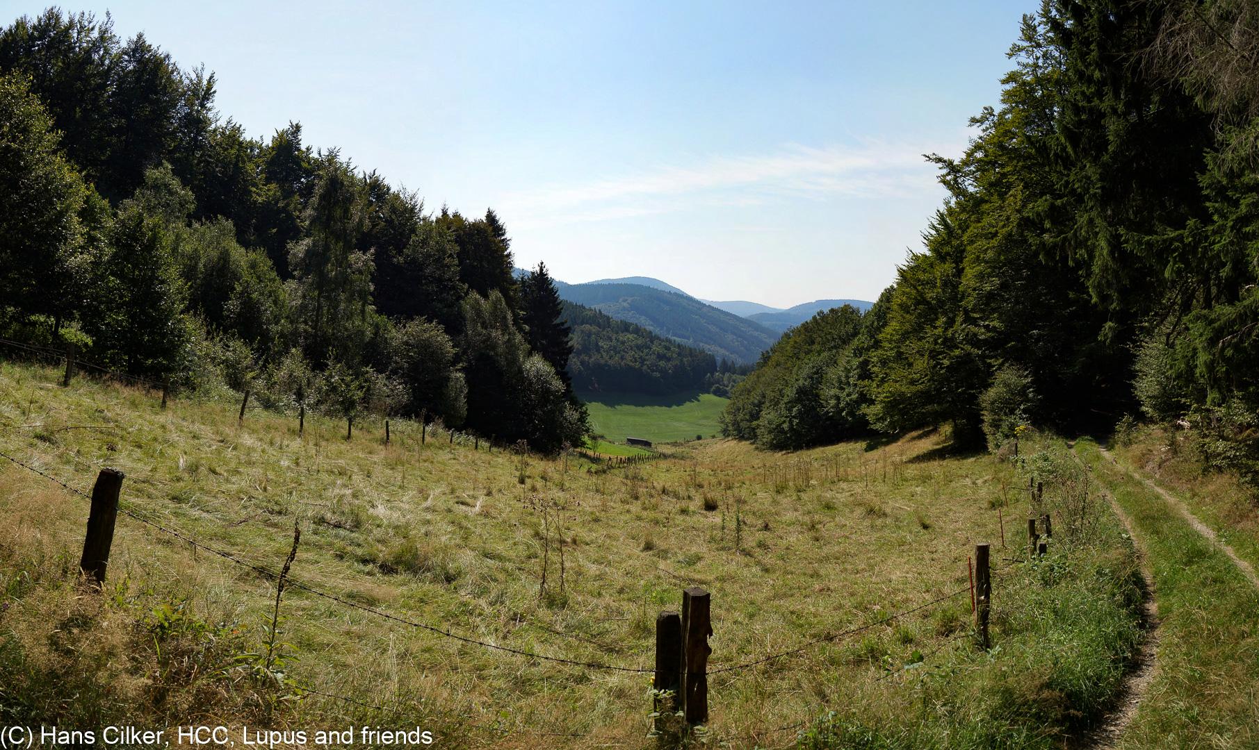 Sauerland Waldroute 13