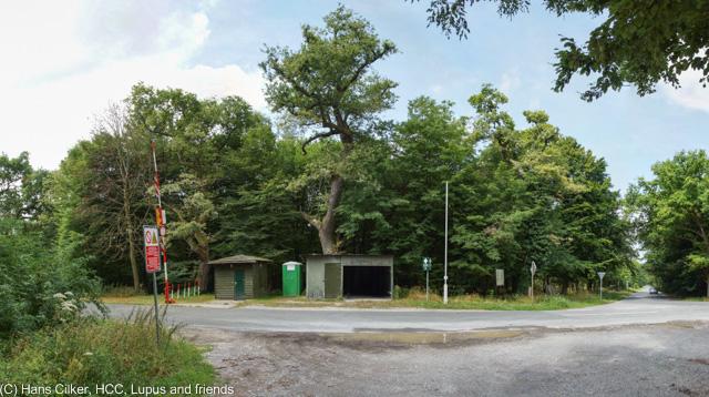 vom alten Parkplatz Lopshorn geht es vor zum Forsthaus Hartröhren