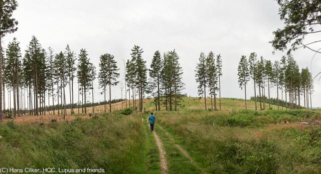 von Brilon Wald hinauf auf den Eiberg, runter nach Willingen und zrück