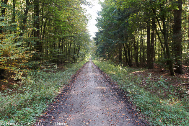 von Brochterbeck zum Habichtswald