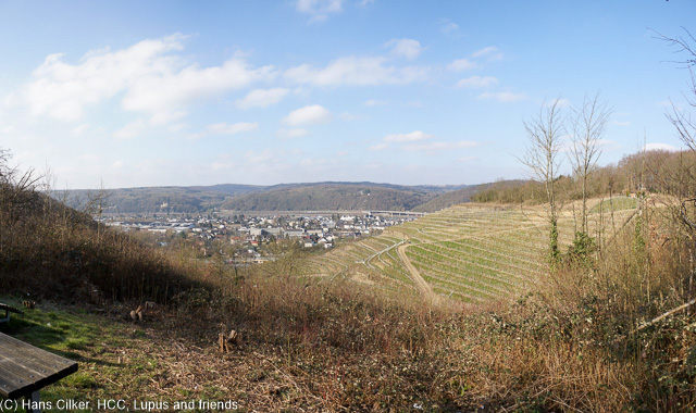 leider nicht ganz so fein vom Weg her und es geht gewalltig rauf und runter bei wenig Abwechselung und so steigen wir nicht mehr hoch zum Drachenfels sondern wandern durch Rhöndorf.