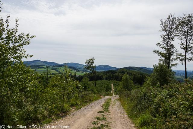 Wir starten am Waldparkplatz oberhalb von Olsberg, wandern dann runter durch Olsberg und Bigge und über den Bestwig Panoramaweg zur Waldroute, da dann zurück über Bigge und hoch zum Parkplatz, der Weg durchwachsen, aber zumindest teilweise tolle Sichten.