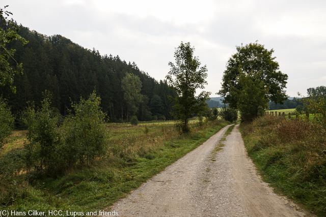 das Tal der Aa wie immer ein Highlight, aber der Rest erst mal viel Wald, auf den letzten Drücker dann dieser spitzen Steinbruch.