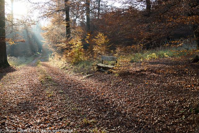 wir starten am Parkplatz oberhalb von Biebertal und wandern durch den herbstlichen Wald, Aussicht, ja, aber erst als wir auf dieWaldroute treffen und auch nur weil wir ein Stück davon abweichen. Biebertal dann schon sehr schön und ein tolles Erlebnis für Kinder.