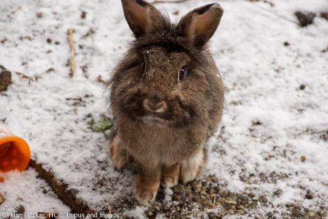 Wir mühen uns redlich um die Kunden zufrieden zu stellen, leider sind die Kaninchen und der Pedro anderer Meinung