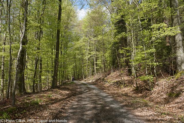 echt coole Etrappe, leider in Bereich des Sindfeldweges etwas viel Wald, dafür aber dann ab Gut Wohlbedacht ein Traum